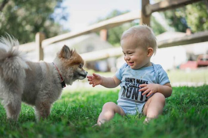 Aggression between dogs and young children