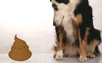 dog eating poop