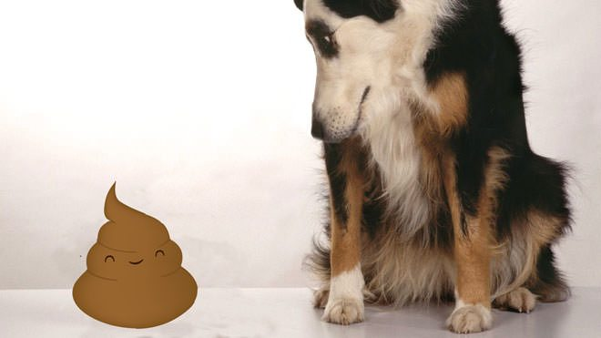 dog eating poop