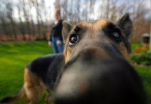 Mistrustful Dog