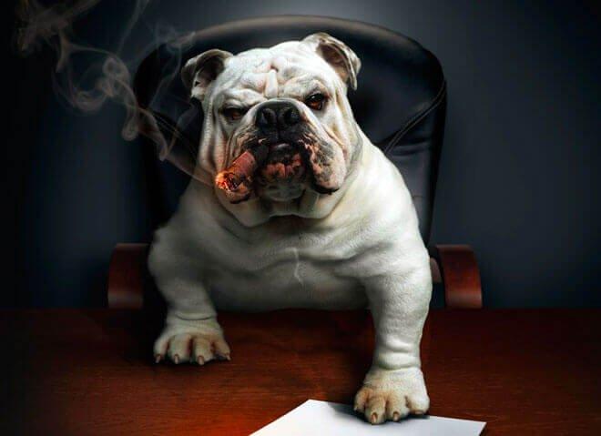 dominant dog behavior