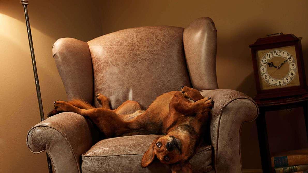 where should dogs sleep