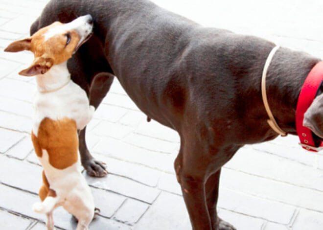 dog castration