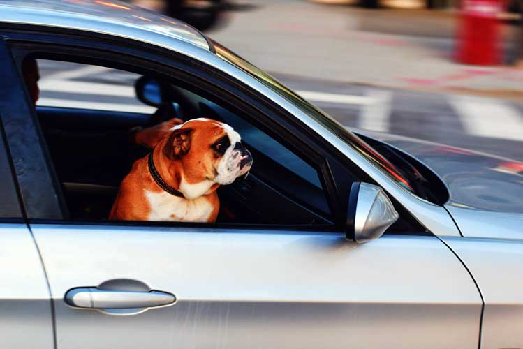 cane in macchina