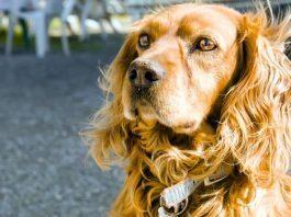 Dogs and earthquake