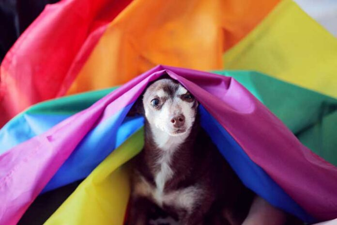 Gay dogs