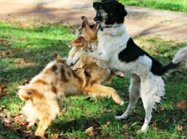 how to stop dog barking at other dogs
