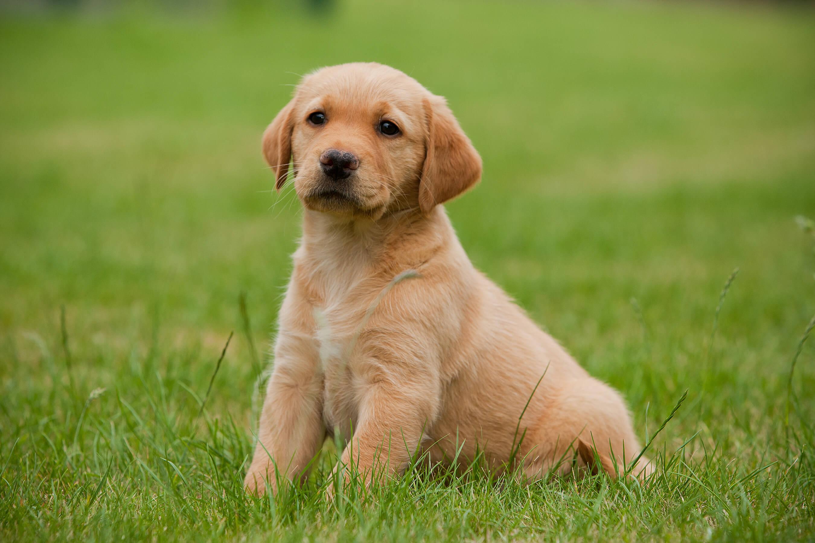 Prosocial behavior in dogs