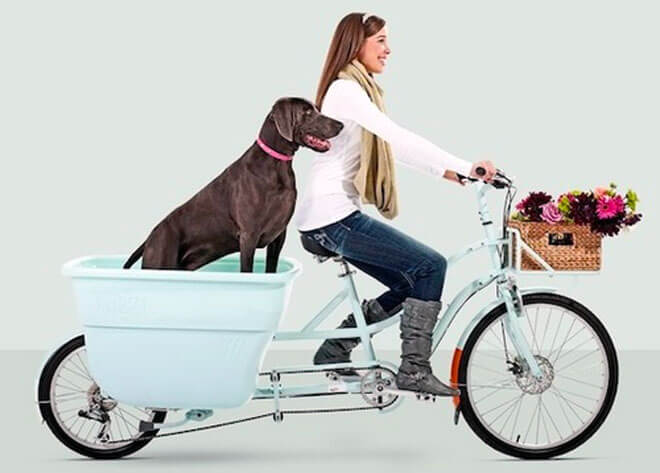 bike ride with the dog