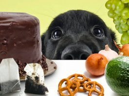 forbidden foods for dogs