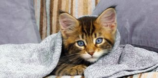 cats coldwhat to do