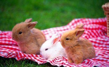 behavior of your dwarf rabbit