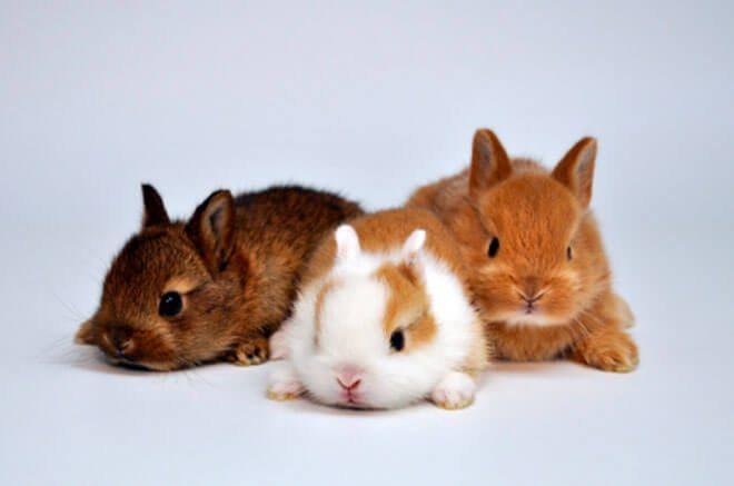 behavior of a dwarf rabbit