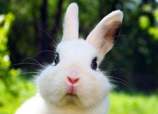 rabbits bite