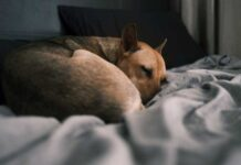 Is it good to sleep in bed with your dogs
