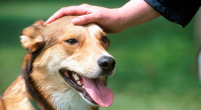 do dogs like being stroked