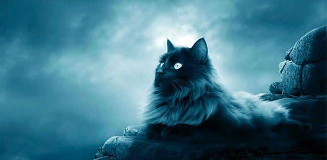 persian cat blue