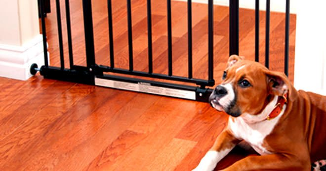 teach your dog not to get out of the gate