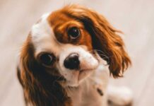 How to teach your dog where to take care of business