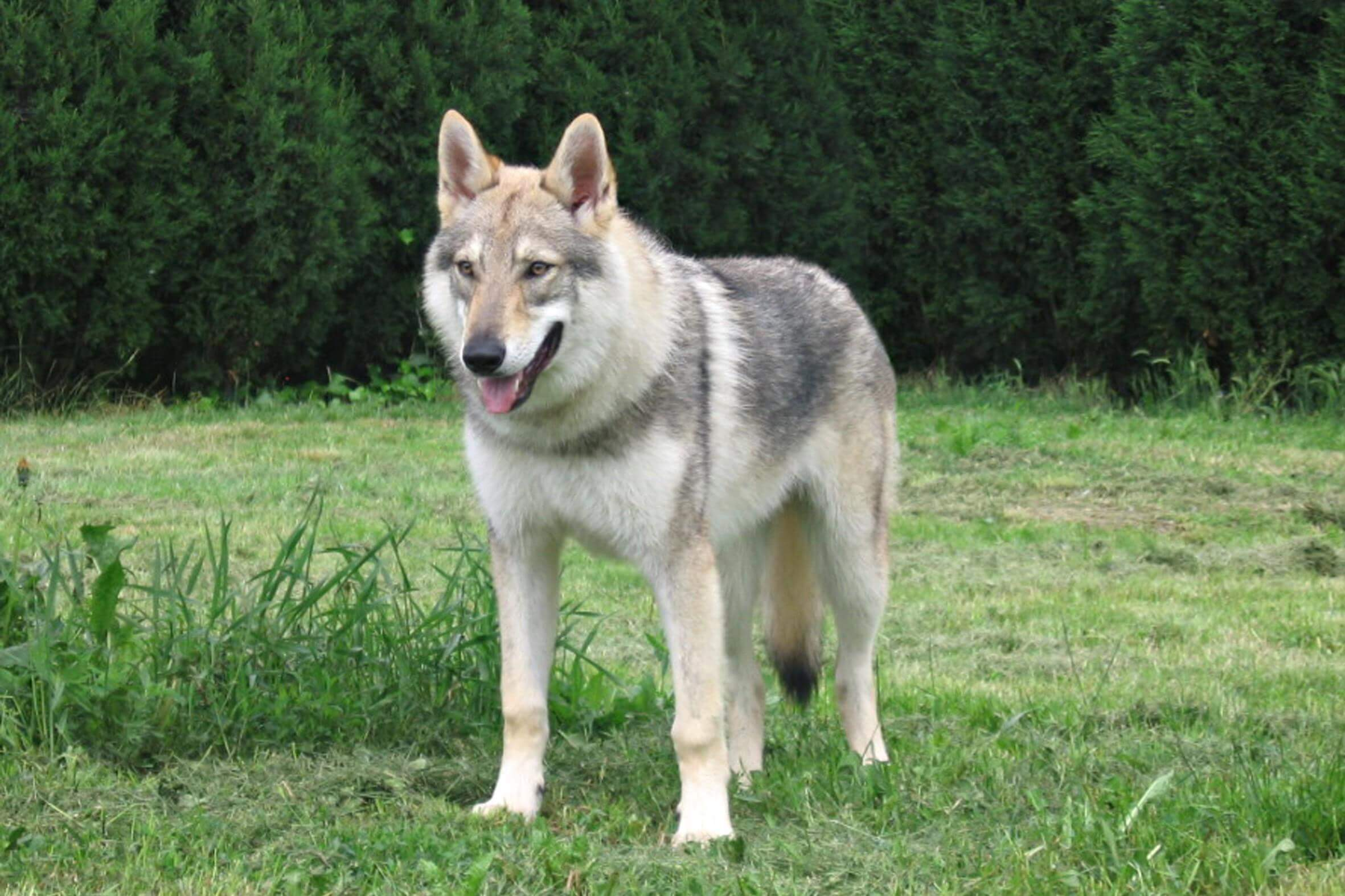 Luvin Dog