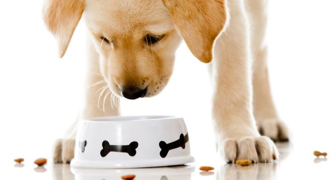 what to feed your dog