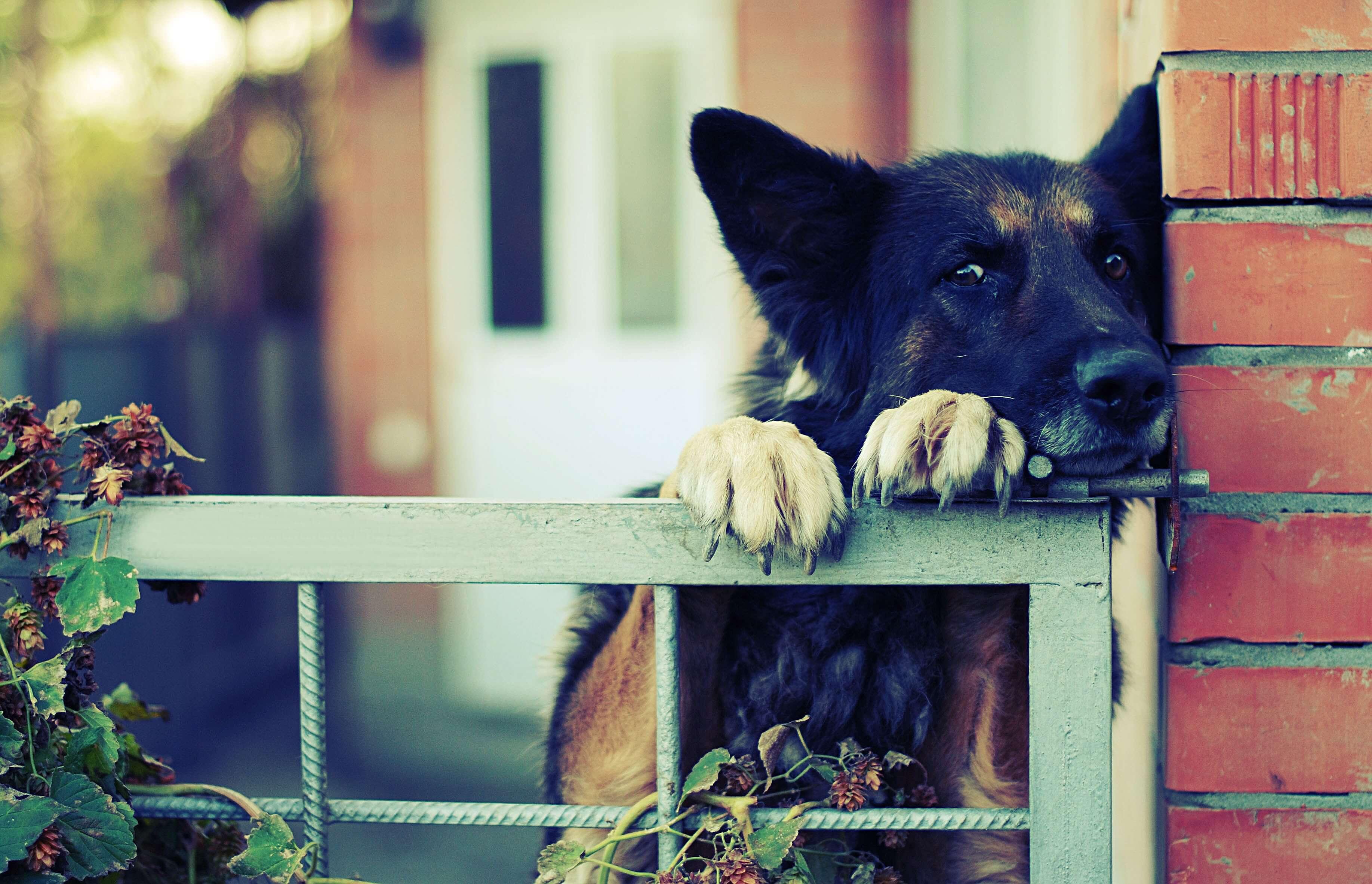 Territorial dog behavior