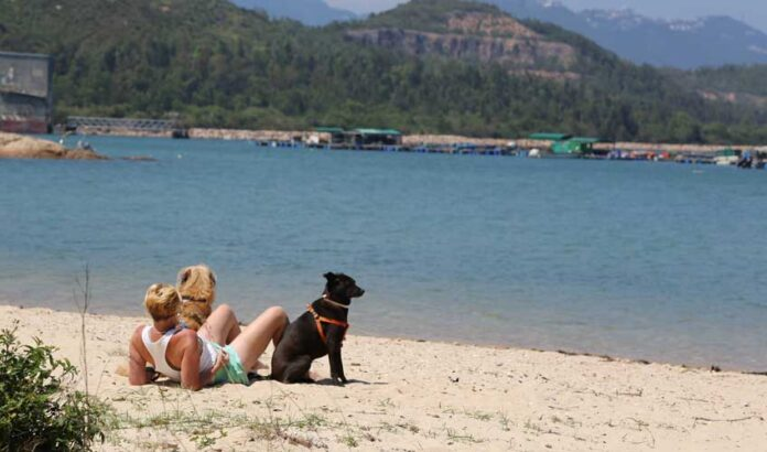 Holidays with your dog