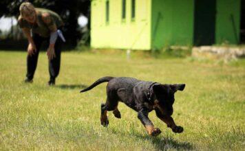 Dog behaviourist